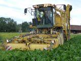 ROPA Eurotiger beet harvester