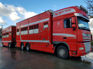 DAF XF 105-510 For pigs or bovines + livestock trailer