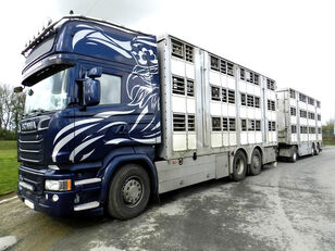 SCANIA R730 V8 animal transport for pigs or bovines + livestock trailer