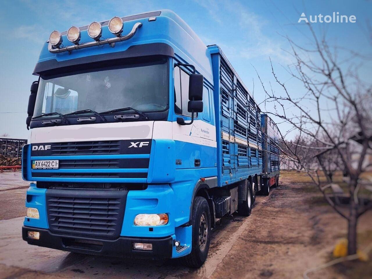 DAF XF 95 480 tractor unit + livestock trailer