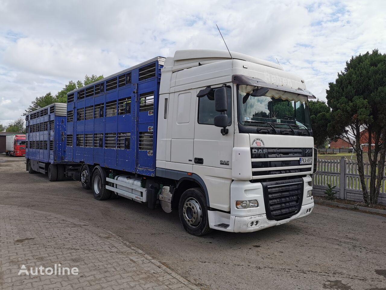 DAF XF 105. 410 livestock truck