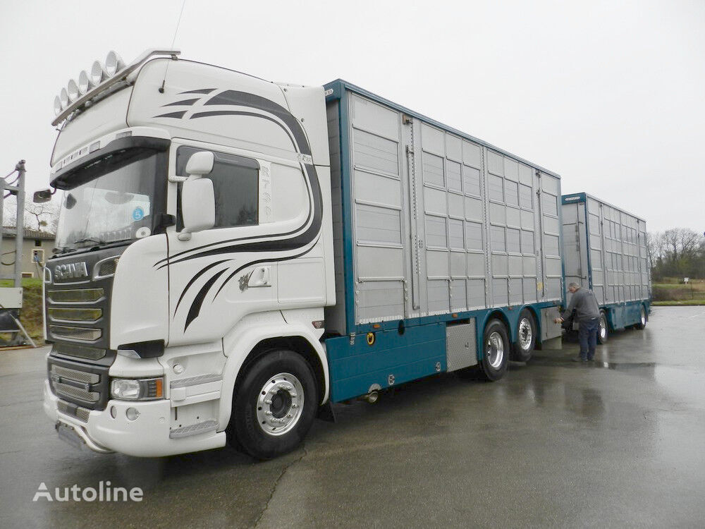 SCANIA R 730 V8 For cattle transport livestock truck + livestock trailer