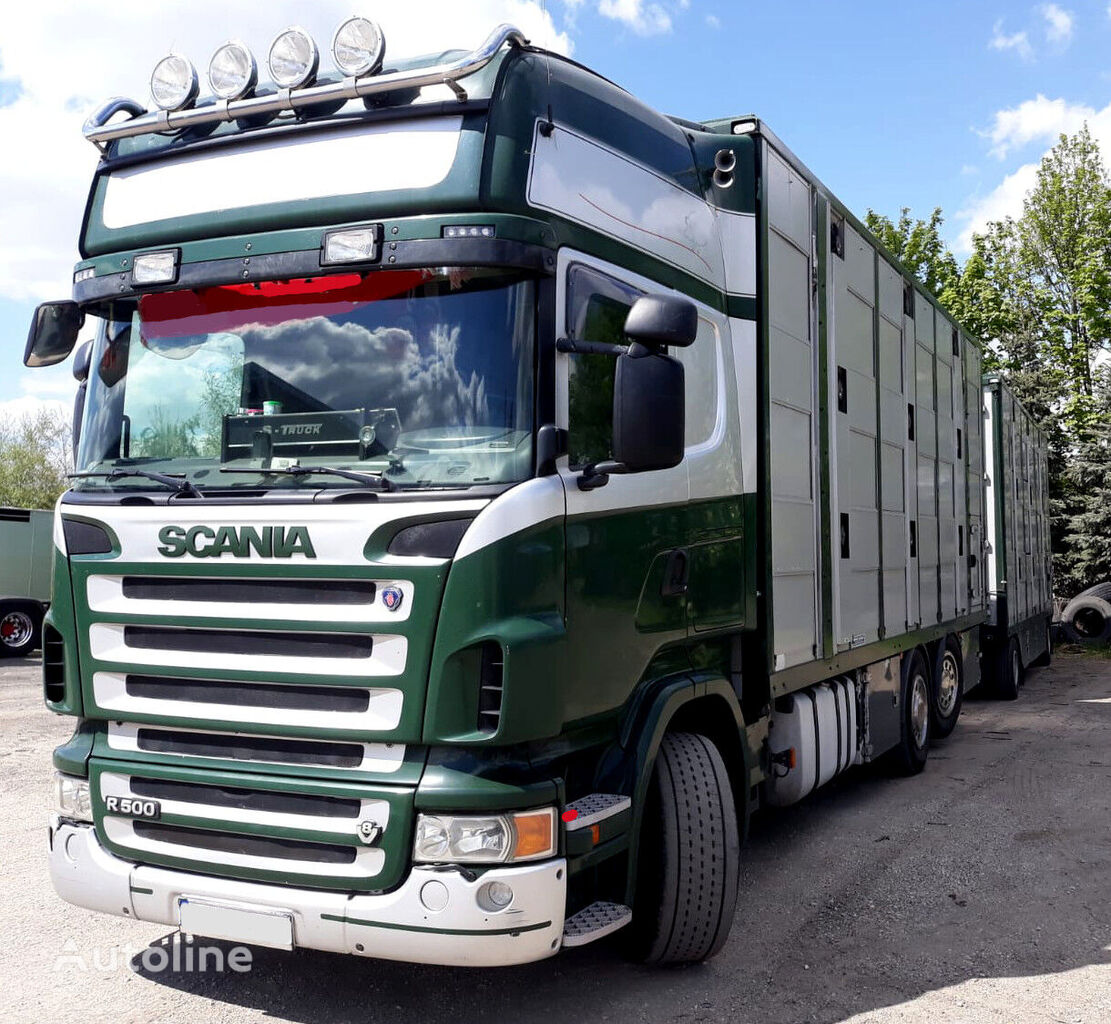SCANIA R500 V8 for pigs - calves - sheeps. livestock truck + livestock trailer