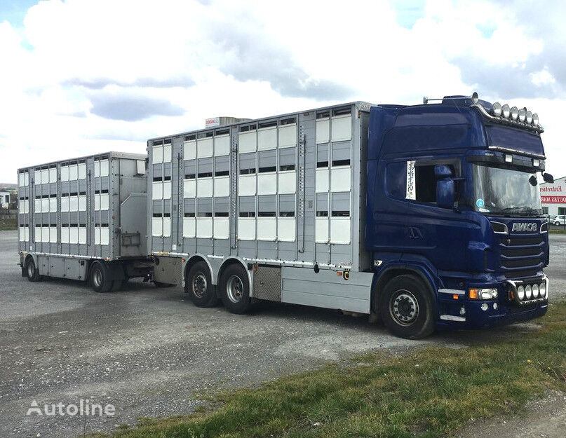 SCANIA R620 V8 For animal transport - do zywca livestock truck + livestock trailer