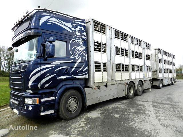 SCANIA R730 V8 animal transport for pigs or bovines  livestock truck + livestock trailer