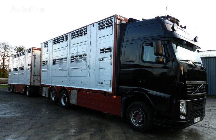 VOLVO FH 540 livestock truck + livestock trailer