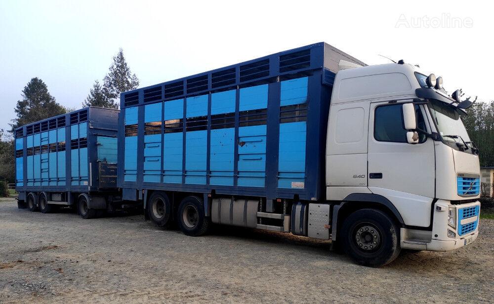 VOLVO FH 540 for cattle transport livestock truck + livestock trailer